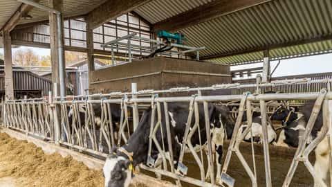 Gülleseparator von Börger auf einem Milchviehbetrieb