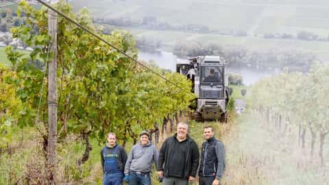 Steillagen-Vollernter für Weintrauben