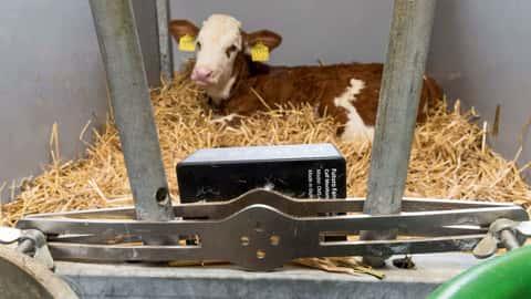 Calf Monitoring System von Futuro Farming
